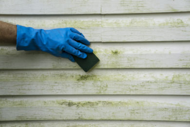 MOSS AND MOULD TREATMENT